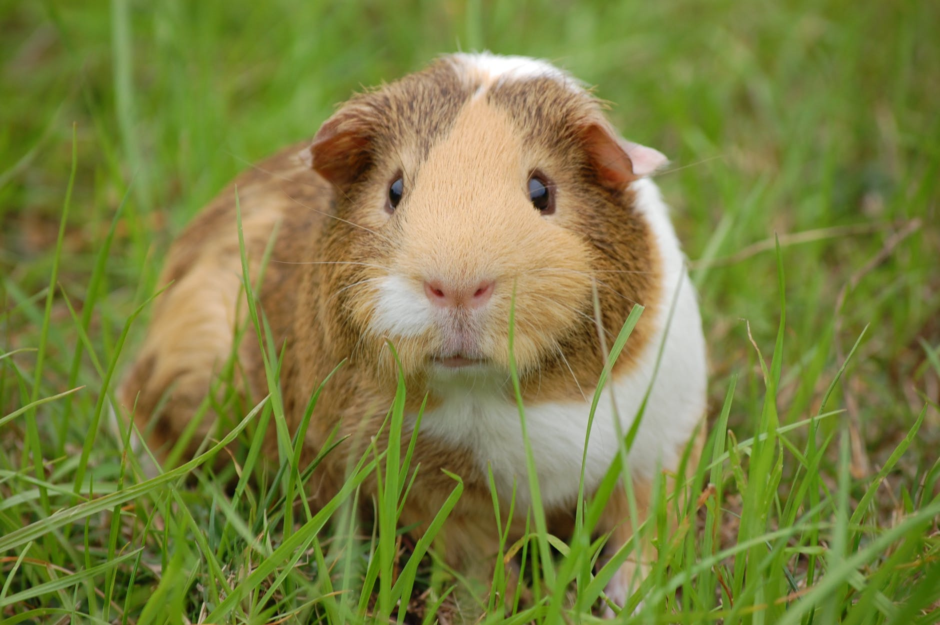 animal pet rodent mammal