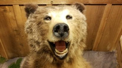 SURPRISE BEAR!